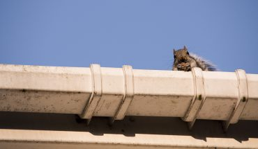 what should you do if pests damage your roof