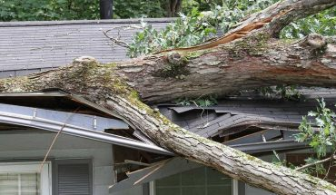 What to do if a tree falls on your roof