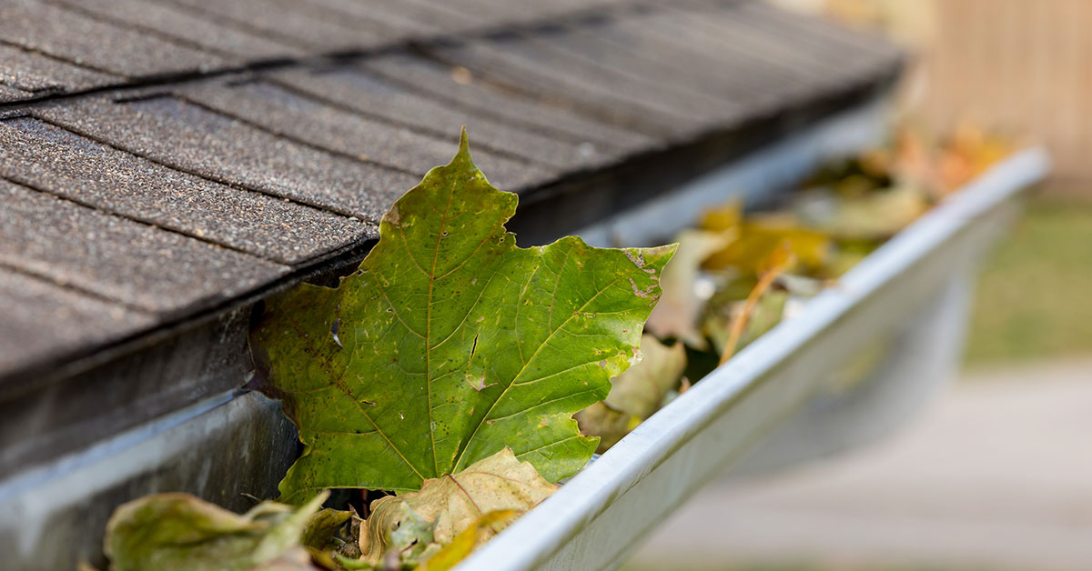 5 Roofing Tips for Spring