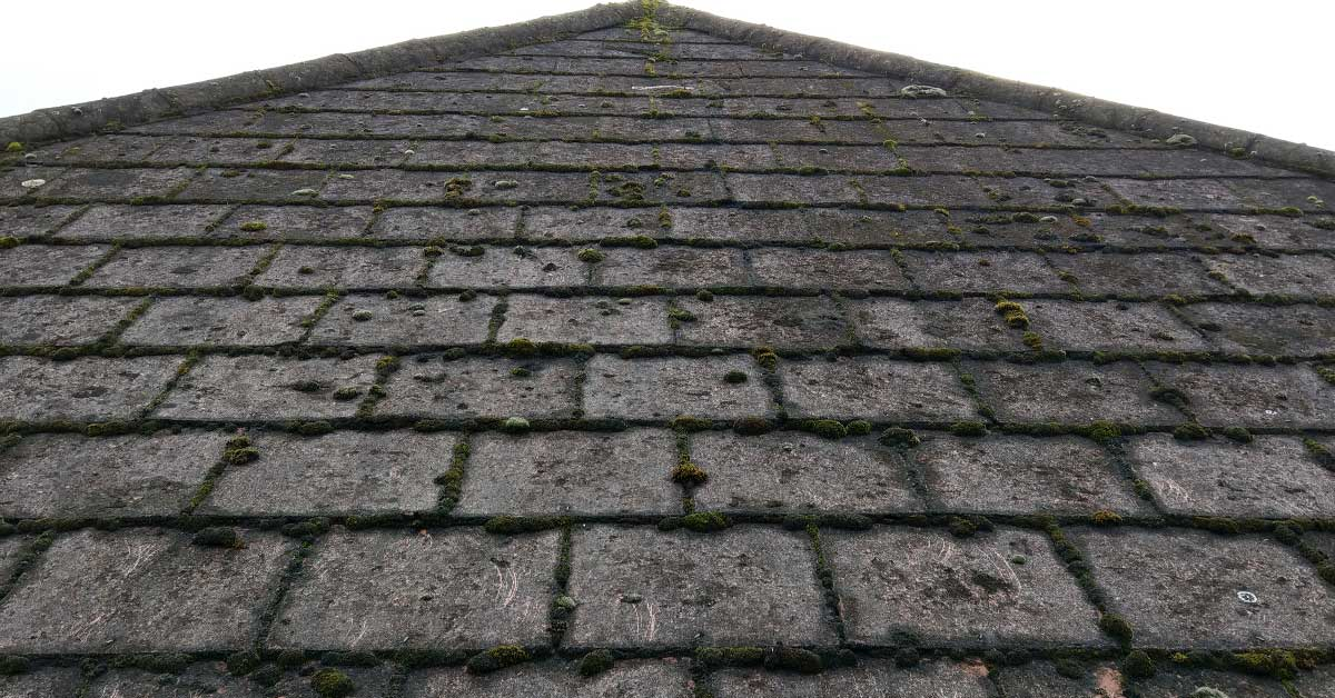 Why Your Roof Looks Dark and How to Prevent it